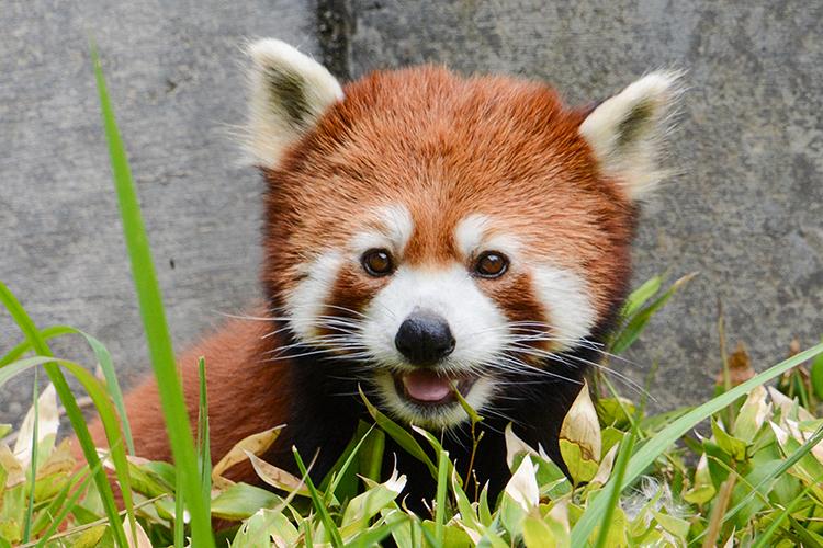 動物園をひとり占め!?レア体験満載の特別イベント「TOkuBEZOO」