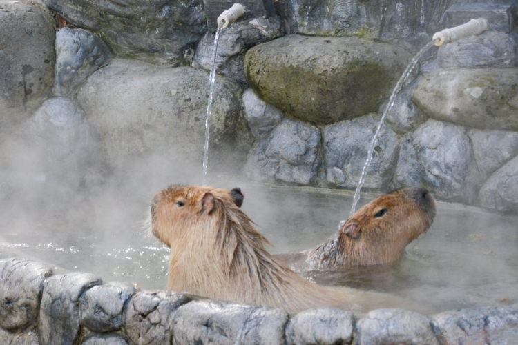 寒い日だからこそおもしろい!冬のとべ動物園のススメ