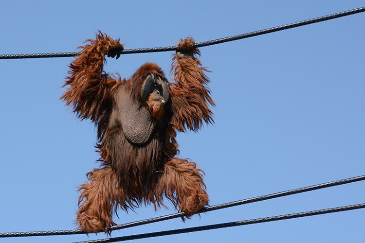 オープン記念イベントも!ジップラインと楽しむとべ動物園の巡り方